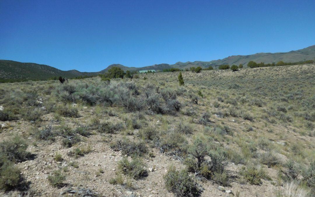 East Creek Parcel, Nevada, 89318