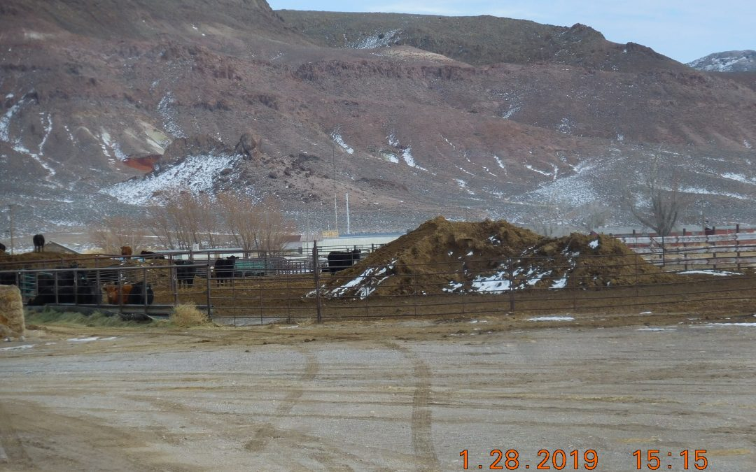 Feed Lot in Currant Creek, NV