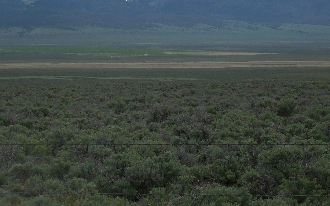 314 acres in Steptoe Valley